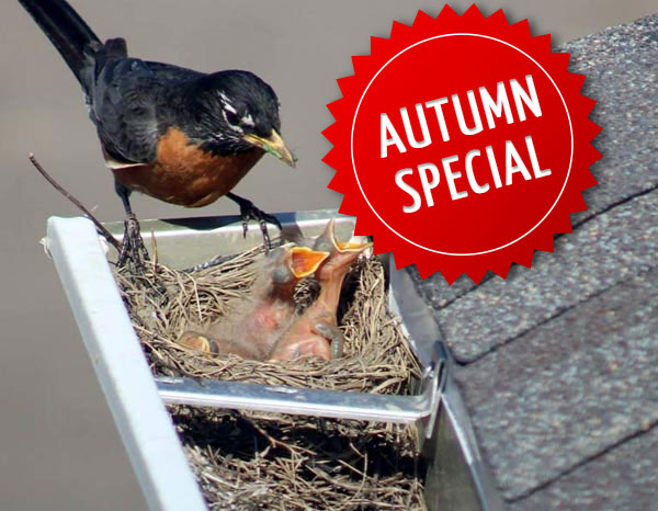 Get a minimum of $550 in savings during our Bird Proofing Autumn Special!
