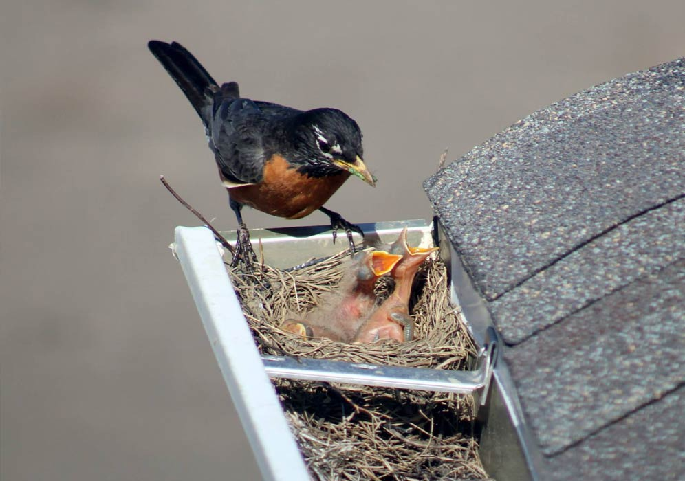 We have over 28 years of experience in home solutiosn, and will help you bird proof your home.